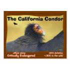 The California Condor is a magnificent bird - Postcard