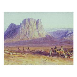 The Camel Train, Condessi, Mount Sinai, 1848 Postcard