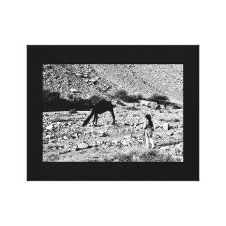 The Camel Whisperer Canvas Print