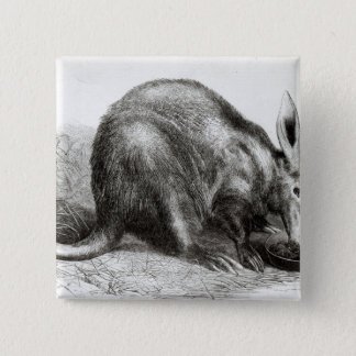 The Cape Ant-Eater 15 Cm Square Badge