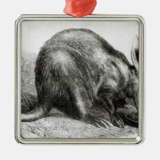 The Cape Ant-Eater Silver-Colored Square Decoration