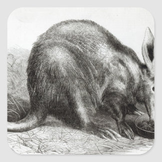 The Cape Ant-Eater Square Sticker