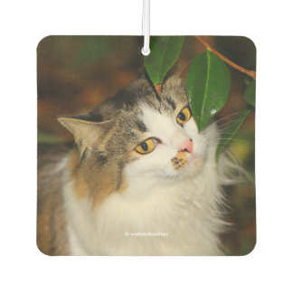 The Cat and the Camellia Car Air Freshener