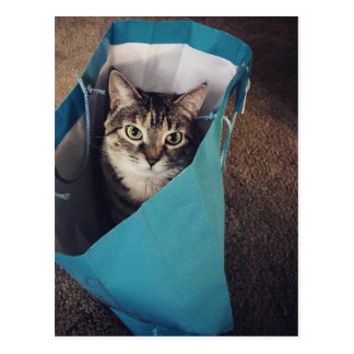 The cat is ready to come out of the bag postcard