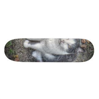 the cat skateboards