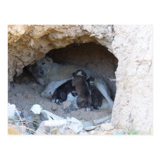 The Cave Postcard