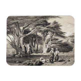 The Cedars of Lebanon, engraved by Freeman (sepia Magnet