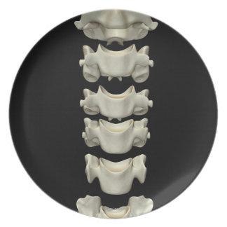 The Cervical Vertebrae 7 Dinner Plate