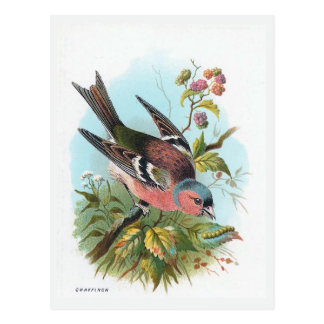 """The Chaffinch"" Postcards"