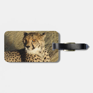 The Cheetah Luggage Tag