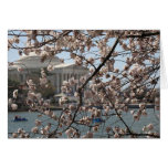 The Cherry Blossoms In Bloom In Washington DC Greeting Card