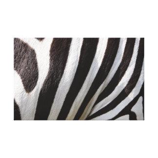 The Close-up. Zebra. Canvas Print