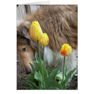 The Collie and the Tulips Card