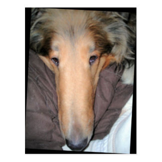 The Collie NOSE postcard