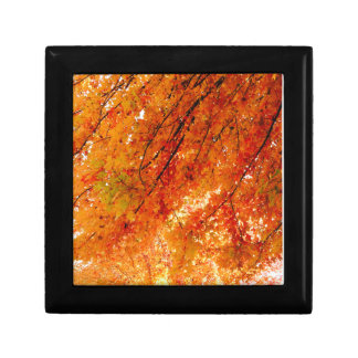 The Colors of Fall in Omaha  Original Digital Art Small Square Gift Box