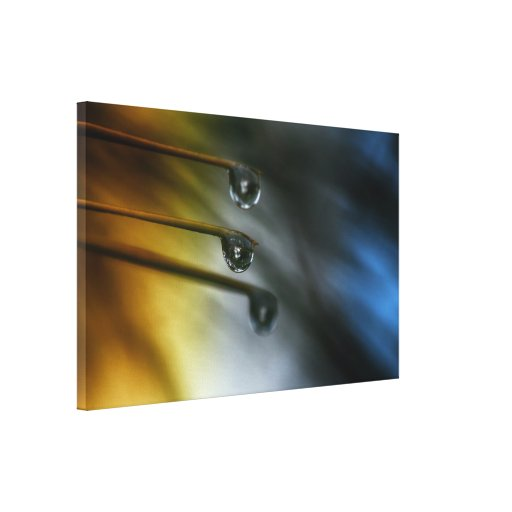 The Colors of the Seasons Stretched Canvas Print