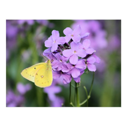The Complimentary One Butterfly Photography Art Postcard