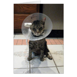 The Cone Of Shame Greeting Card