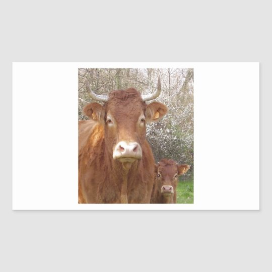 The cow and his calf - the cow and its calf rectangular sticker