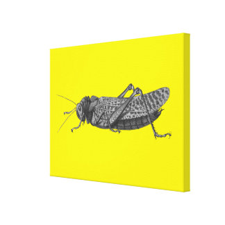 The Cricket Canvas Print
