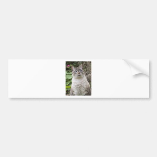 The cross eyed cat bumper stickers