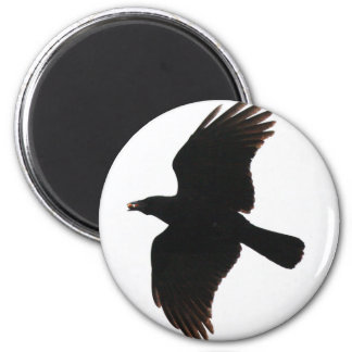 The Crow By Poe Magnet