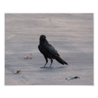 The Crow In A Parking Lot Poster