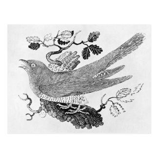 The Cuckoo Postcard