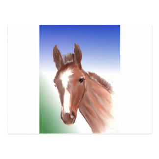The curious foal postcard