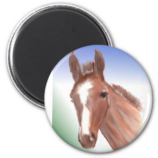 The curious foal refrigerator magnet