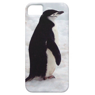 The Cutest Penguin, Ever Case For The iPhone 5