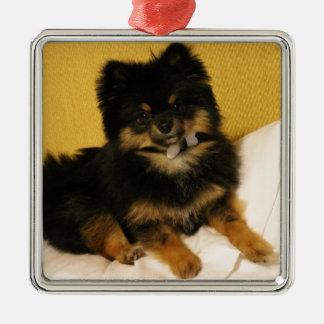 The cutest Pomeranian Christmas Ornament