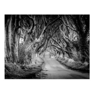 The Dark Hedges in Black&White Postcard