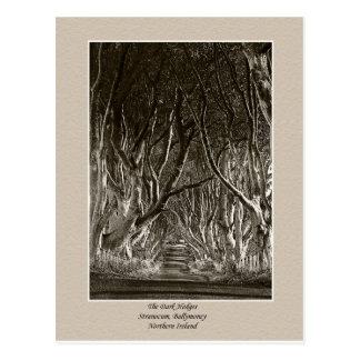 The Dark Hedges, Stranocum, Ballymoney NI postcard
