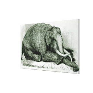 The Dead Elephant Canvas Print