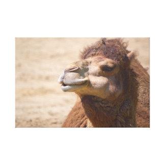 The dromedary camel  - Canvas