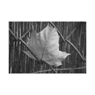 The Dry Maple Leaf - Canvas Gallery Wrap Canvas