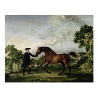 """The Duke of Ancaster's bay stallion """"Blank"""" Postcard"""