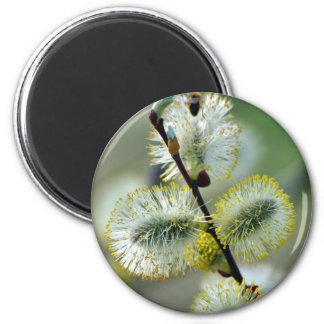 The Easter Catkins - Magnet