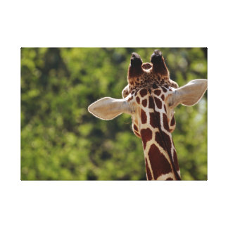The Eavesdropping Giraffe. Canvas Print