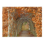 The Enchanted Path Postcard