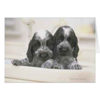 The English Cocker Spaniel is a breed of dog. It Greeting Card