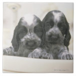 The English Cocker Spaniel is a breed of dog. It Large Square Tile