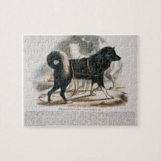 The Esquimaux Dog (Canis familiaris) educational i Jigsaw Puzzle