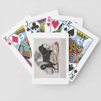 The Esquimaux Dog (Canis familiaris) educational i Poker Deck