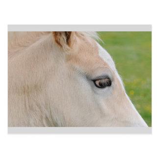 The eye of a Haflinger Rare Breed Pony Postcard