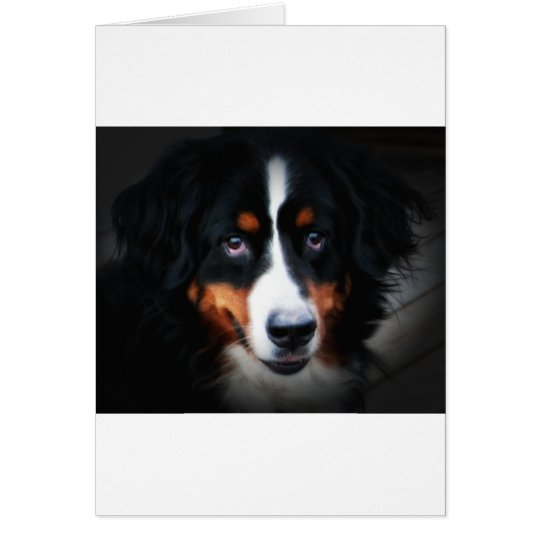 The Eyes of a Bermese Mountain Dog Card