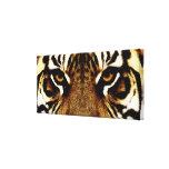 The Eyes of a Tiger Gallery Wrap Canvas