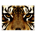 The Eyes of a Tiger Postcards