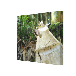 The Fall of the Bamboo Tree Canvas Print